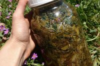 Learn herbal medicine making. This is a vinegar tonic.