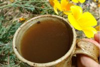 Astragalus Decoction