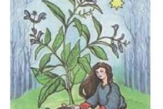 Herbal Tarot