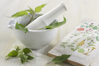 Guest Blog: How to Study Herbal Medicine by Kristi Shapla
